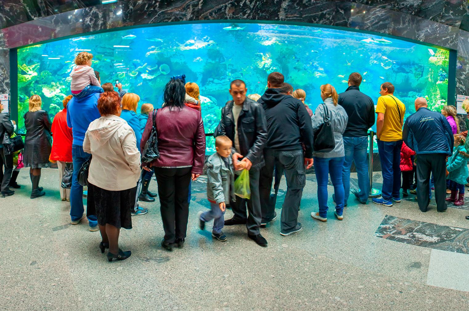мегагринн москва фото аквариум медведь